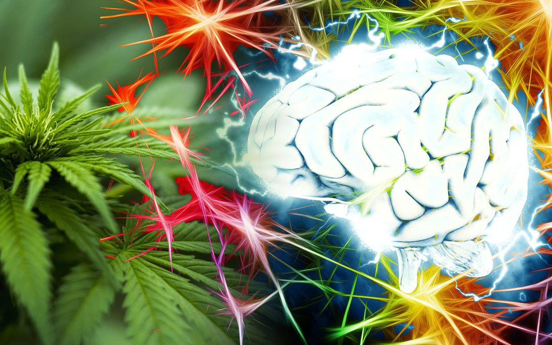 Anandamid – Der Glückseligkeits-Stoff in deinen Zellen